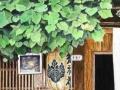 日语入门基础培训学校!南通标准日本语培训,思元外语