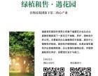 福州绿植租摆/绿植销售/绿植养护/景观设计/