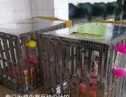 宠乐游宠物托运,空运,桂林柳州全国连锁,安全保障