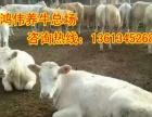 山西较近品种肉牛价格合理
