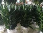 深圳公明私家花园设计 私家花园养护