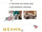 _杭州宠物微创绝育_