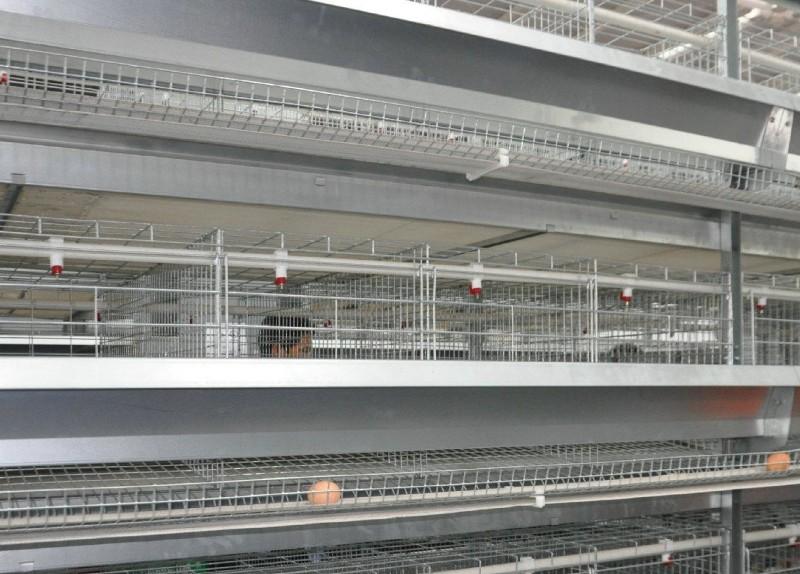 鸡笼 蛋鸡笼价格 兆东鸡笼厂