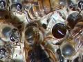 广达蜜蜂养殖场出售中蜂种苗向全国供应中蜂王优质高产