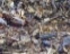沙田、秋长、新圩、镇隆塑胶回收、惠阳胶头回收