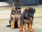 长期繁殖精品德国牧羊犬 各类纯种名犬 签协议