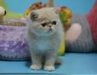 沈阳 哪里有加菲猫卖 多少钱
