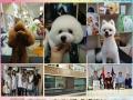 临沂学宠物美容的看过来,山东宠物美容培训学校包住宿