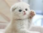 杭州哪里有猫咪卖 杭州专业繁殖猫猫在哪里 包健康包纯种的