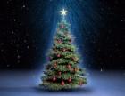 圣诞的临近节庆圣诞树出售圣诞树出租