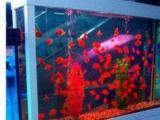 魚缸定做定做魚缸清洗魚缸魚缸清洗消毒