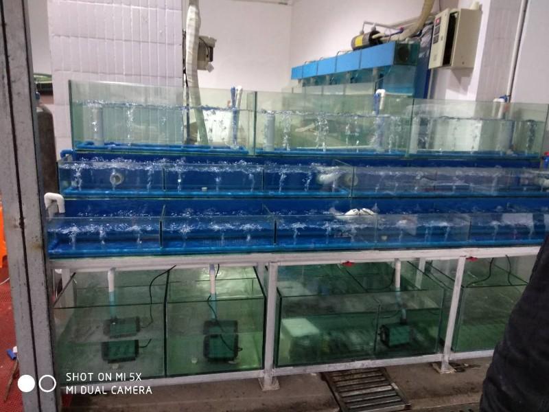 宜兴鱼缸定做鱼缸订做鱼缸海鲜池制作观赏鱼缸订做大闸蟹缸