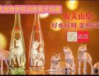 上海物犬狗拍电影广告电视剧 宠物猫拍摄广告