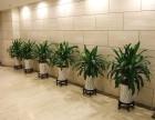 伊卉园艺专业花卉租赁,会场用花,家庭用花