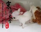 北京最好的犬舍是哪家