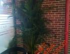 天津宁河花卉租摆绿植销售绿植养护服务公司海明花卉全城配送送货
