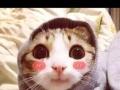 想领养一只小猫咪