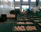 常年批发配送新鲜鸡蛋