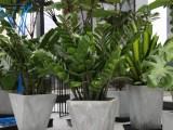漳州招财猫绿植租售公司 专业从事各种场合的绿植租摆和销售