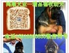 哪里有卖宠物金毛犬的 格力犬养殖场 鸿顺犬业