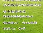 昌平销售草坪价格 昌平别墅草坪厂家 昌平绿化草坪