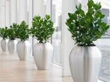 买上海那家绿植公司养护质量好坤石园林生产企业品牌直销