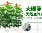 深圳鲜花绿植 花木租摆 绿植租赁 盆景出售 养护