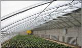 温室大棚造价是多少|连栋薄膜温室工程