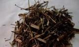 大量供应云南源产地中药材 植物药材 动物