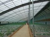 无土栽培温室大棚-温室大棚专业建设厂家