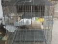 因运输问题造成宠物笼子有一处瑕疵,所以低价处理(全新)。