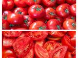 天然绿色农产品、新鲜蔬菜批发  基地直供优质无公害西红柿/番茄