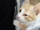 5个月超级可爱的猫咪便宜转让