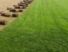 大量出售優質草坪草花