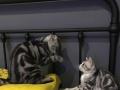 逼格很高的loft风格猫咪寄养
