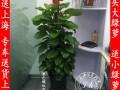 上海绿植租摆花卉租赁办公室酒店商铺植物花卉租赁租摆