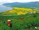 苏州太湖西山岛采茶游 农家乐包吃住全市价低