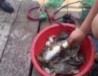 出海捕鱼吃海鲜