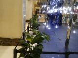 杭州下城花卉绿色植物租摆