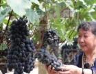 草原射箭 浈阳坊小镇 千亩茶趣园 狂吃葡萄
