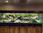 深圳水族鱼缸低价出售 鱼缸送货上门安装 定期维护鱼缸护理