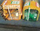 广州长沙宠物托运往各地省会空运火车托运