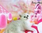 Fariy-miao猫舍渐层开始预定
