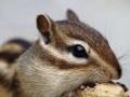 魔王金花淞鼠 兔子仓鼠荷兰猪大量有货低价全国招加盟商代理