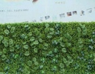 植物墙 绿色背景墙 环保墙专业设计施工