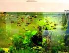 中大型热带鱼发财鱼元宝鹦鹉财神鹦鹉鱼红龙鱼金龙鱼等