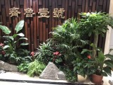 上海绿植办公室内外绿植租摆定期养护免费配送