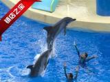 暑假亲子游阳江到港澳游五天游海洋公园一天自由活动