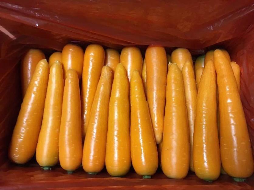 潍坊哪里有胡萝卜供应 供应优质胡萝卜