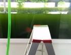 深圳福田莲花有观赏鱼出售 鱼缸清洗服务电话